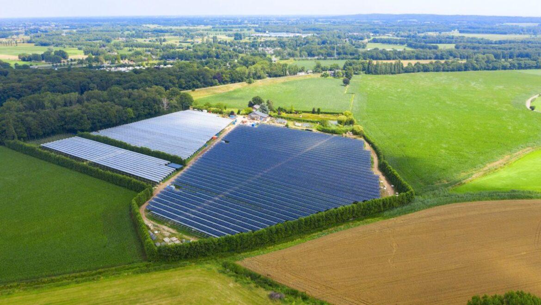 Lamponi e pannelli solari, cresce l'agrofotovoltaico di BayWa